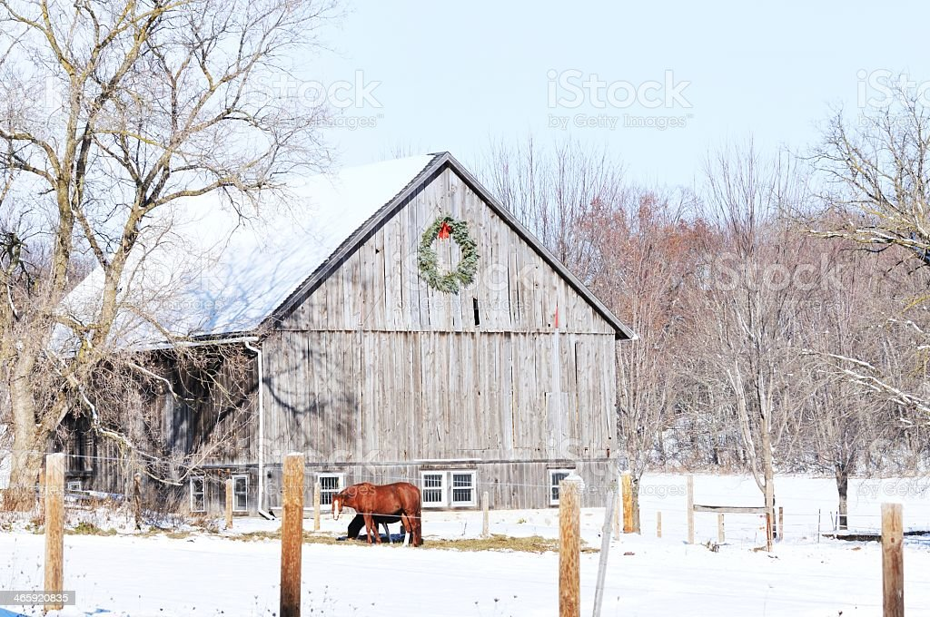 Horse in snow outside wooden barn with wreath on the side stock photo
