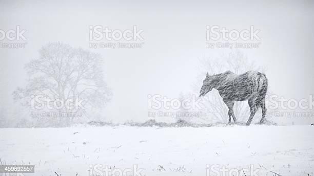 Horse in snow storm picture id459892557?b=1&k=6&m=459892557&s=612x612&h=6srmg6vvxyblaeqfvxi8kig3kggcxavuvrjfuip5u4i=