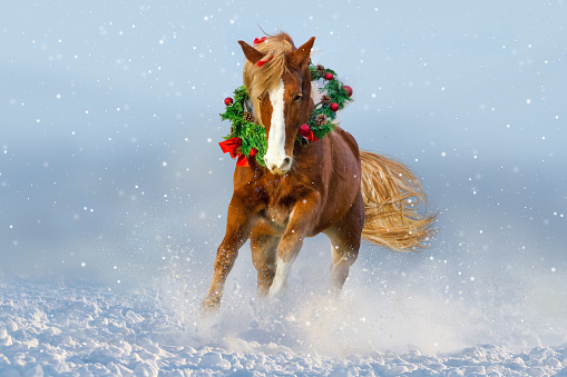 Horse in snow wearing a wreath