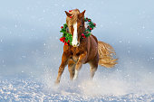 istock Horse in snow wearing a wreath 836633720