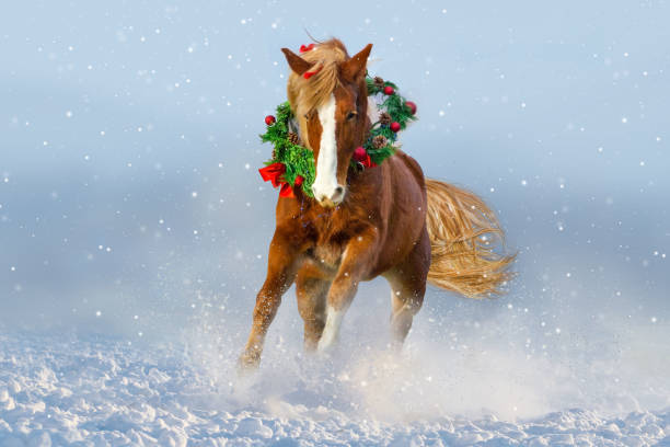 Christmas Horse Pictures.Best Christmas Horse Stock Photos Pictures Royalty Free