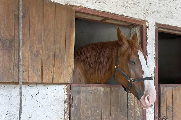 pferd in stabil - traumscheune stock-fotos und bilder