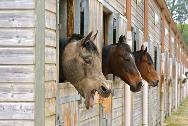 Horse in stable picture id606206330?b=1&k=6&m=606206330&s=612x612&w=0&h=feptysdmw1nifot e44aljw5kigqmvlffkopngeouz4=