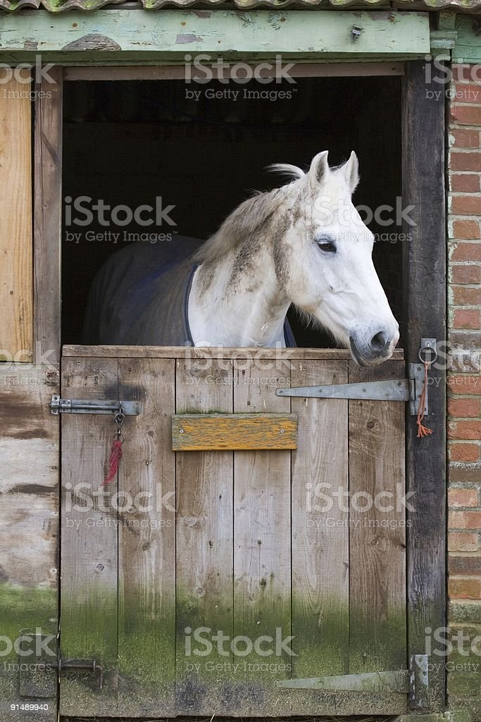 Horse in stable royalty-free stock photo