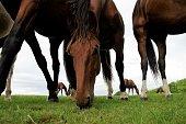 Horse in summer