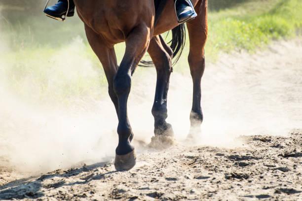 Horse in sunny dust picture id867348038?b=1&k=6&m=867348038&s=612x612&w=0&h=3kc9ikj98n5500ayqdjzc zwkhxwtrmlf y hkw vbs=