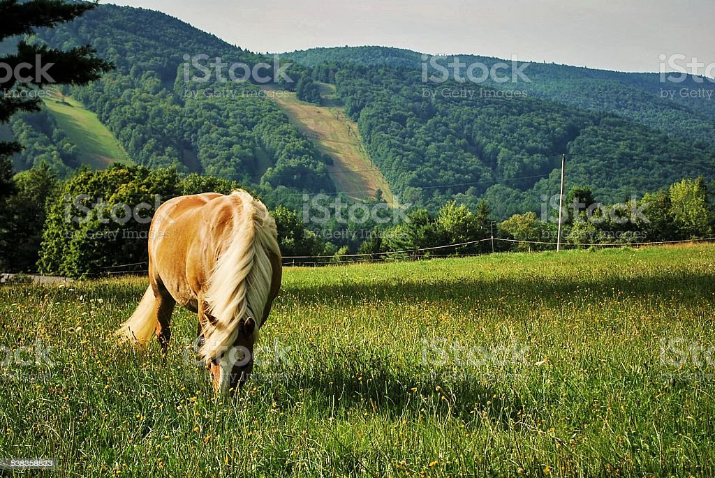 Horse in the Berkshires stock photo