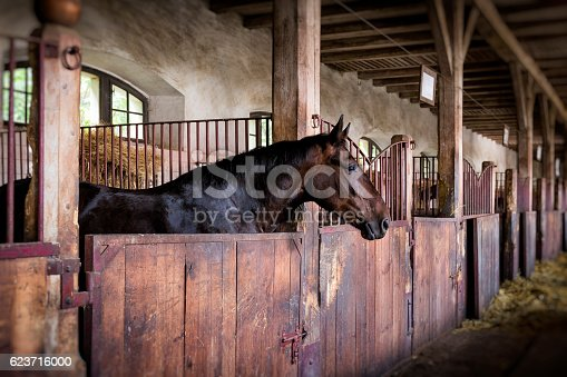 Horse in the box stable