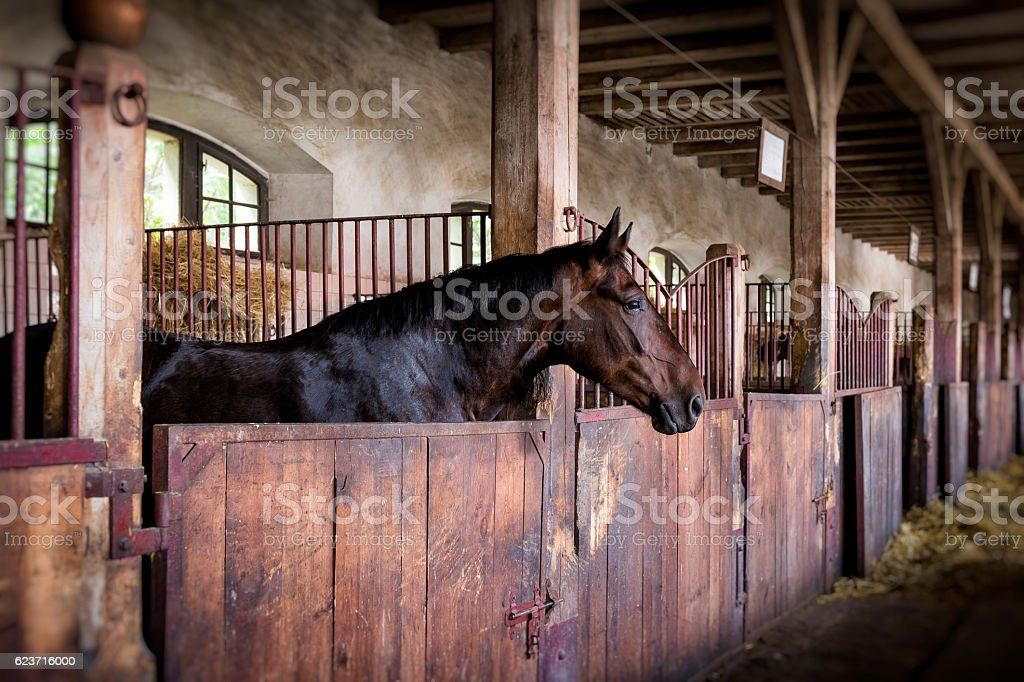 Horse in the box stable – Foto