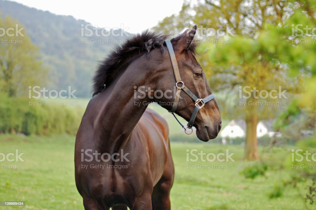 Horse In The Country 3 royalty-free stock photo