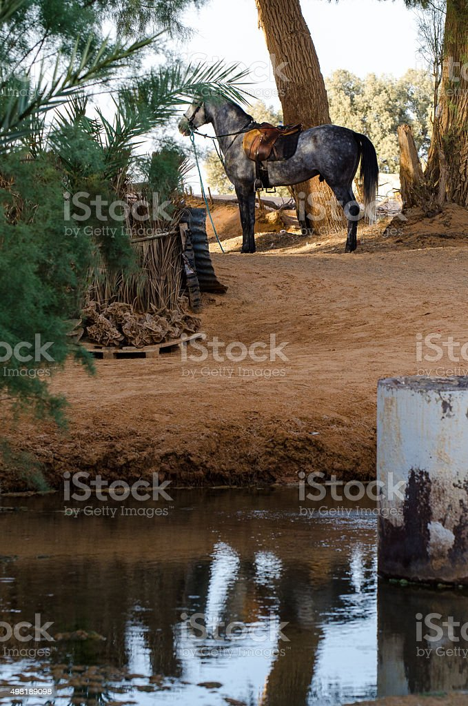 Horse in the desert stock photo