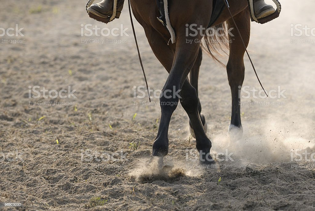 Horse in the dust royalty-free stock photo
