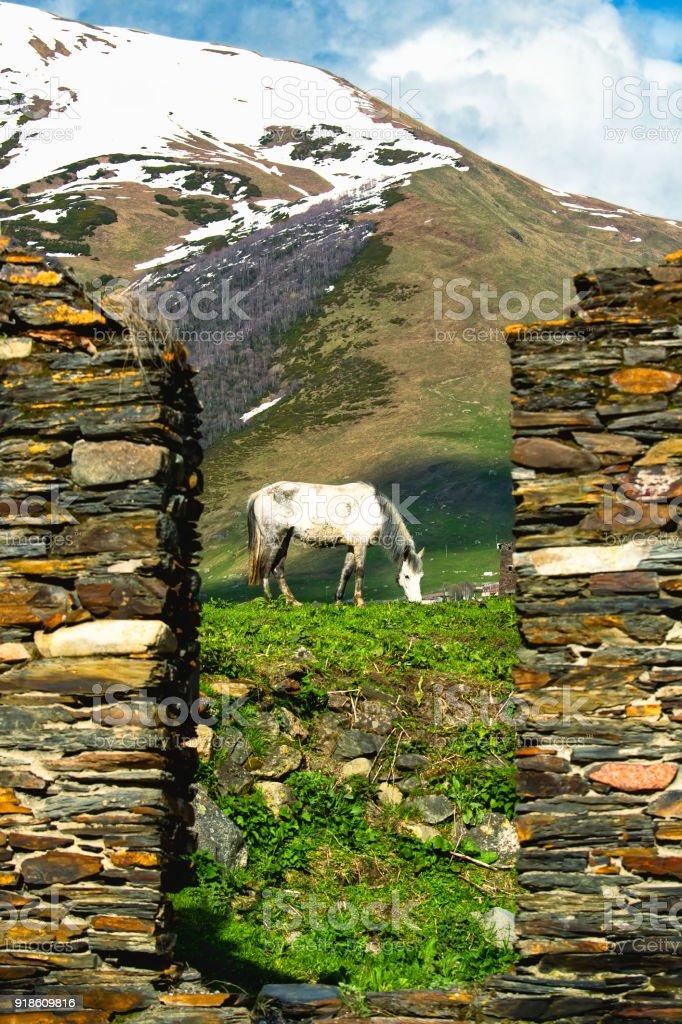 Horse in the field in Ushguli village, Svaneti, Georgia, UNESCO World Heritage site and popular travel destination stock photo