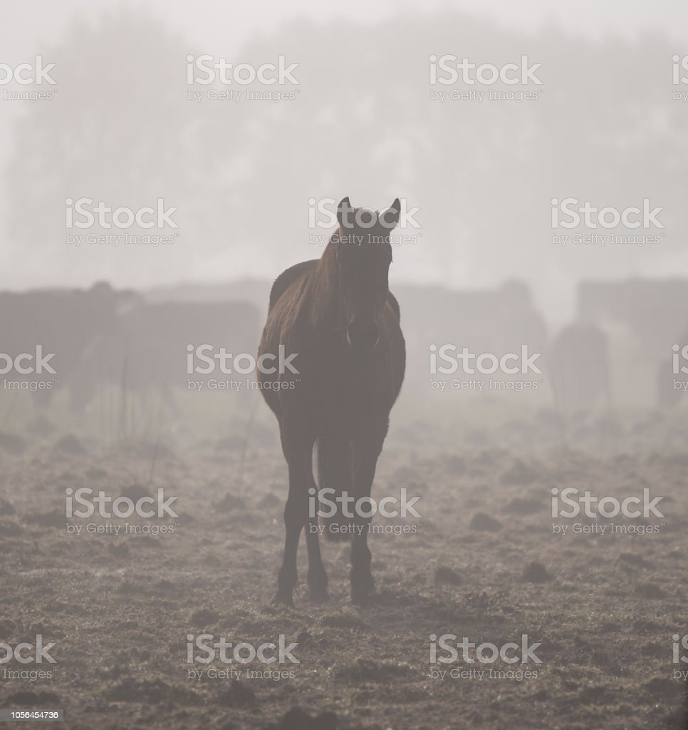 Horse in the fog stock photo