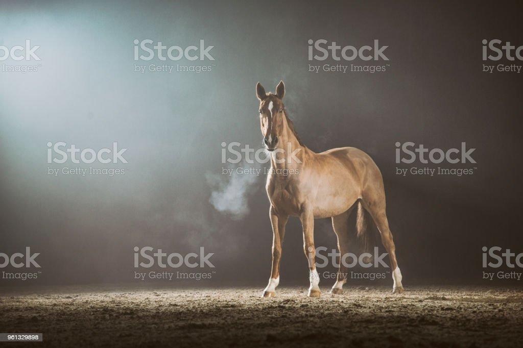 Caballo en la niebla - foto de stock
