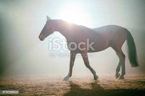 Horse running in the fog. Silhouette photo of a backlight horse.