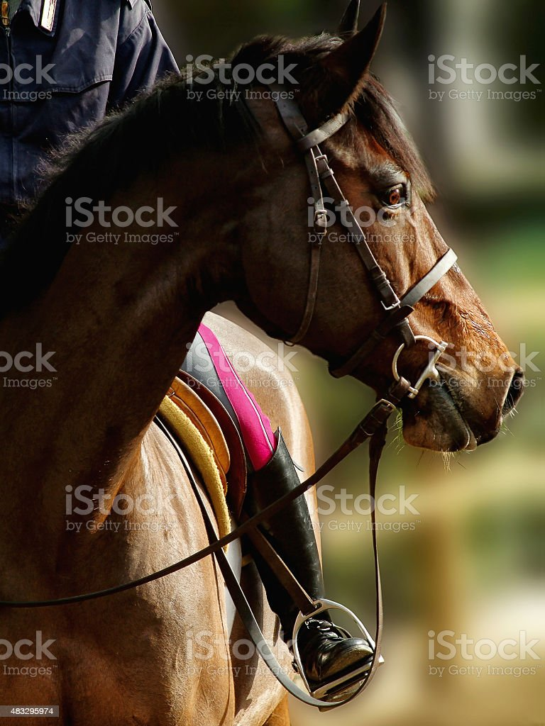 Horse in the foreground stock photo