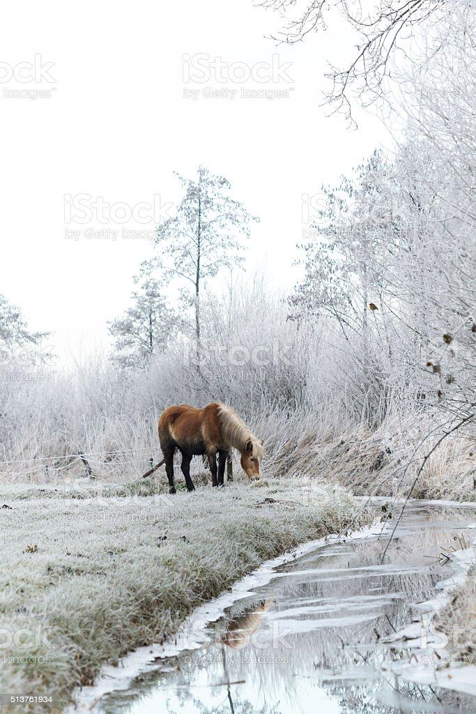 Pferd im gefroren Wiese. – Foto