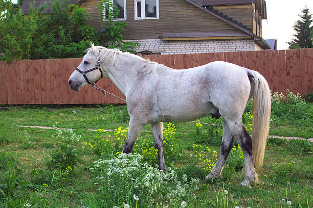 Horse in the meadow in the village. stock photo