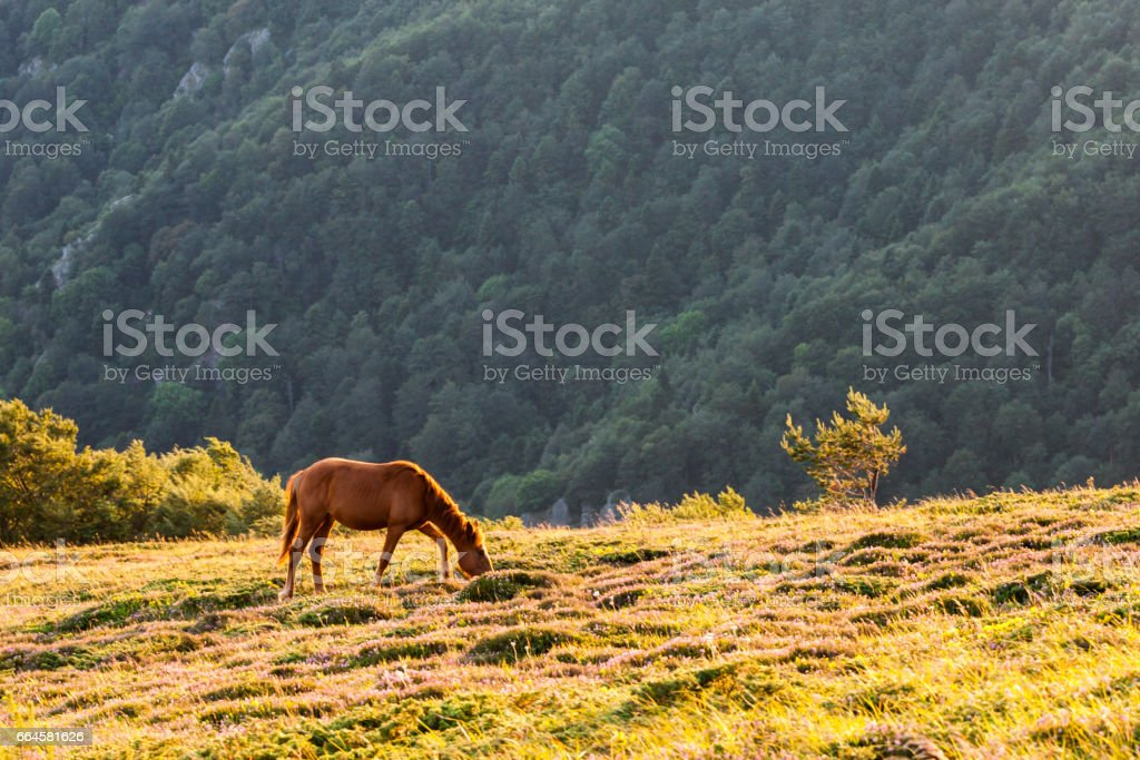 Horse in the mountain at sunset royalty-free stock photo