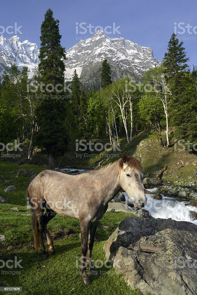 Horse in the mountains royalty-free stock photo