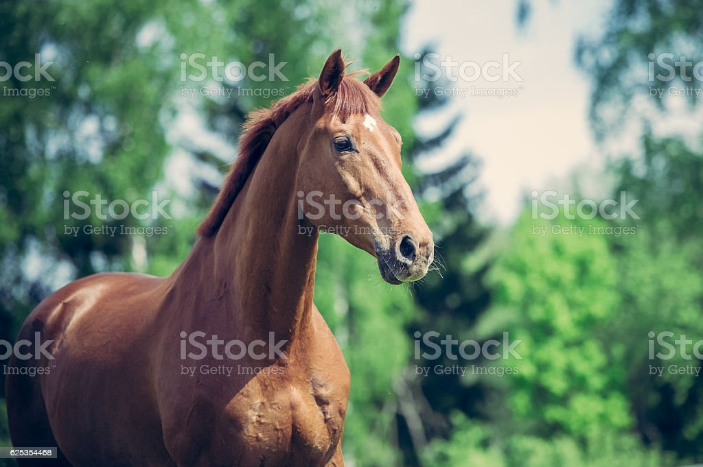 Horse in the paddock in the evening light stock photo