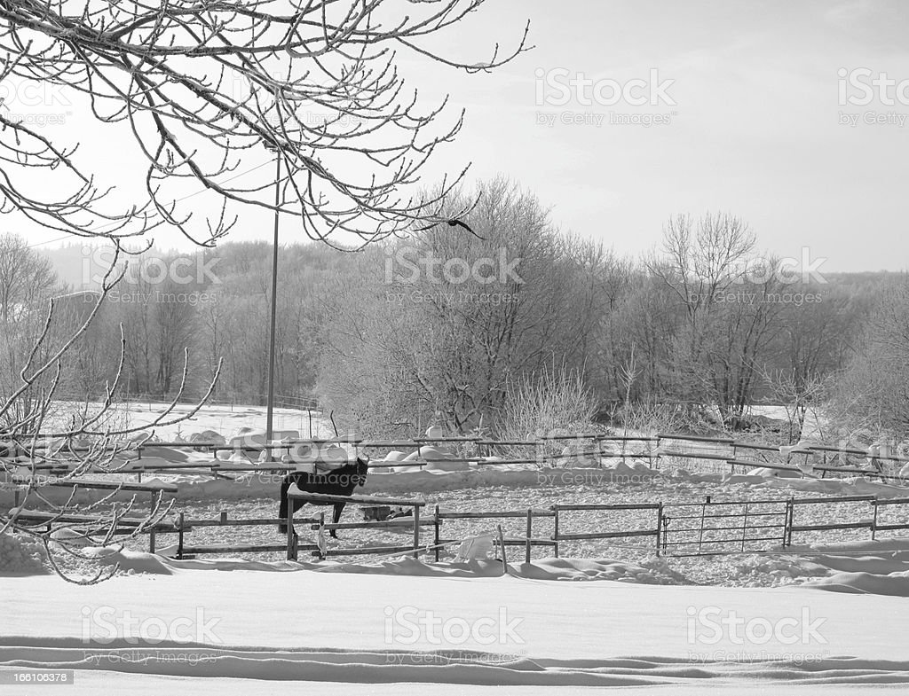 Horse in the snow royalty-free stock photo