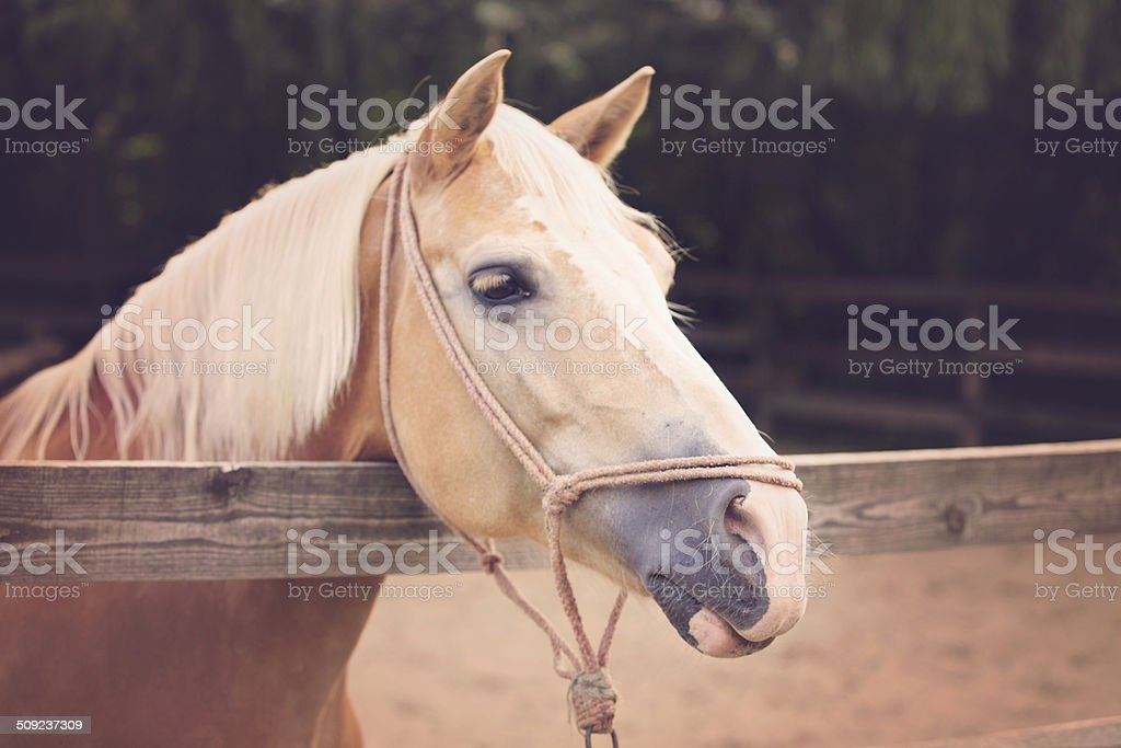 Horse in the stable royalty-free stock photo