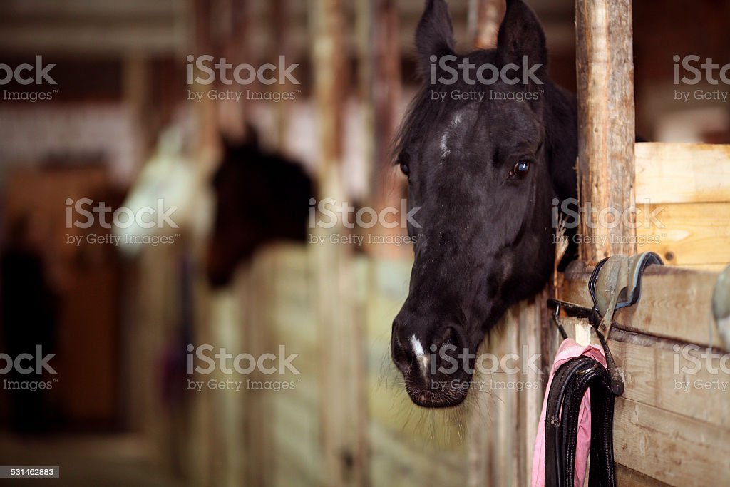 horse in the stable stock photo