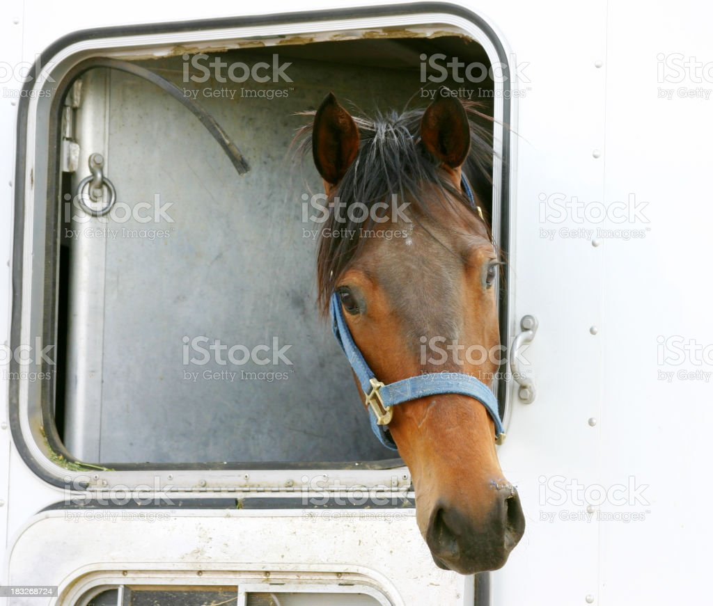 Horse in Trailer royalty-free stock photo