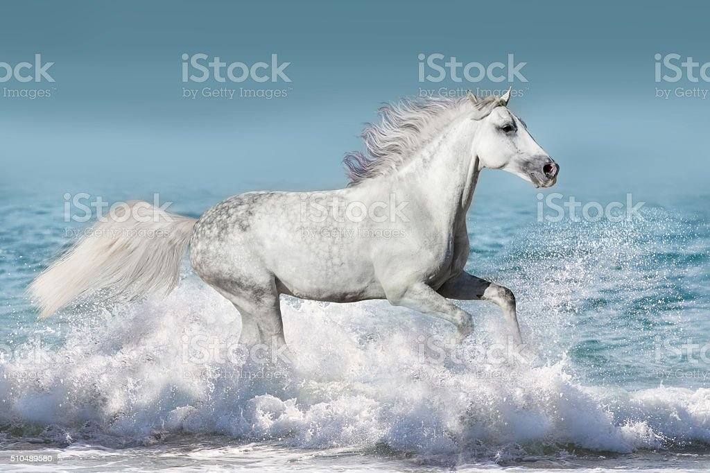 Horse in water stock photo