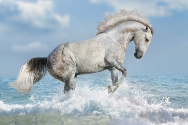 Horse in water picture id843612456?b=1&k=6&m=843612456&s=612x612&w=0&h=nrujg3dtwhfppzm1gb5vvccjvoijnwfqftkceyelvkg=