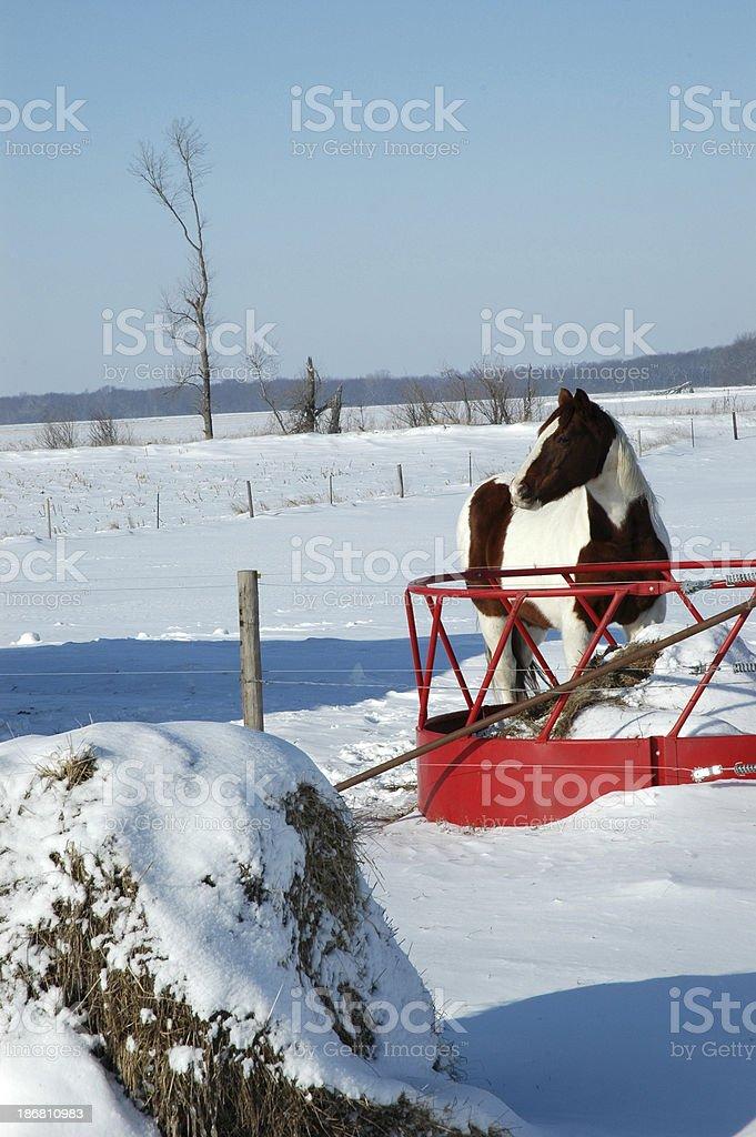 Horse Induring Winter stock photo