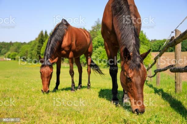 Horse is eating fresh grass picture id960498112?b=1&k=6&m=960498112&s=612x612&h=qdbjuunb6yxsjf05jpxyshh868vcpmap4dvrcc3edxa=