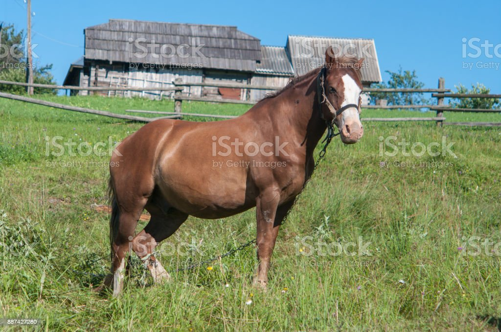 Horse is grazing off the grass in a village stock photo