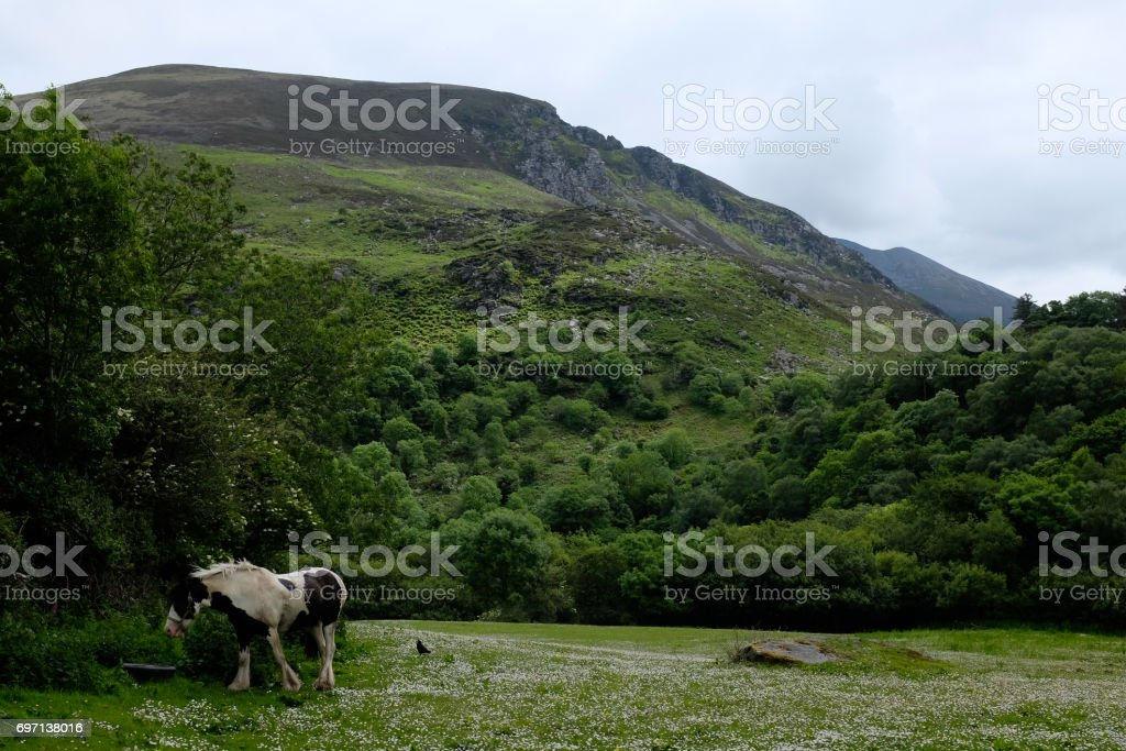 A horse, its meadow, and their mountains stock photo