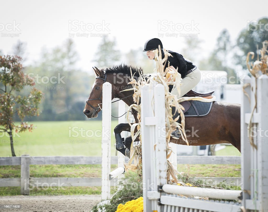 Horse jumper focused on the next jump stock photo
