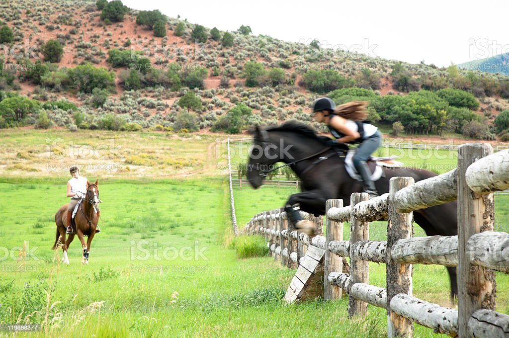 Horse jumping in a Colorado field stock photo