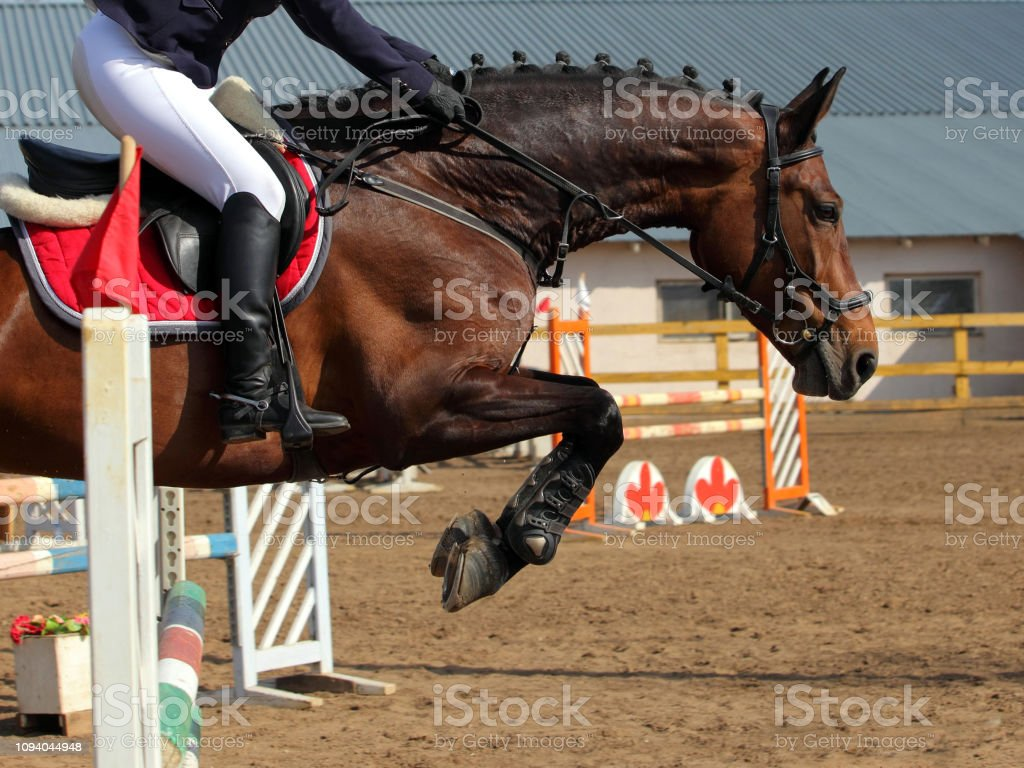 Horse Jumping Obstacle Rider Takes The Reins Before The Jump Stock Photo Download Image Now Istock
