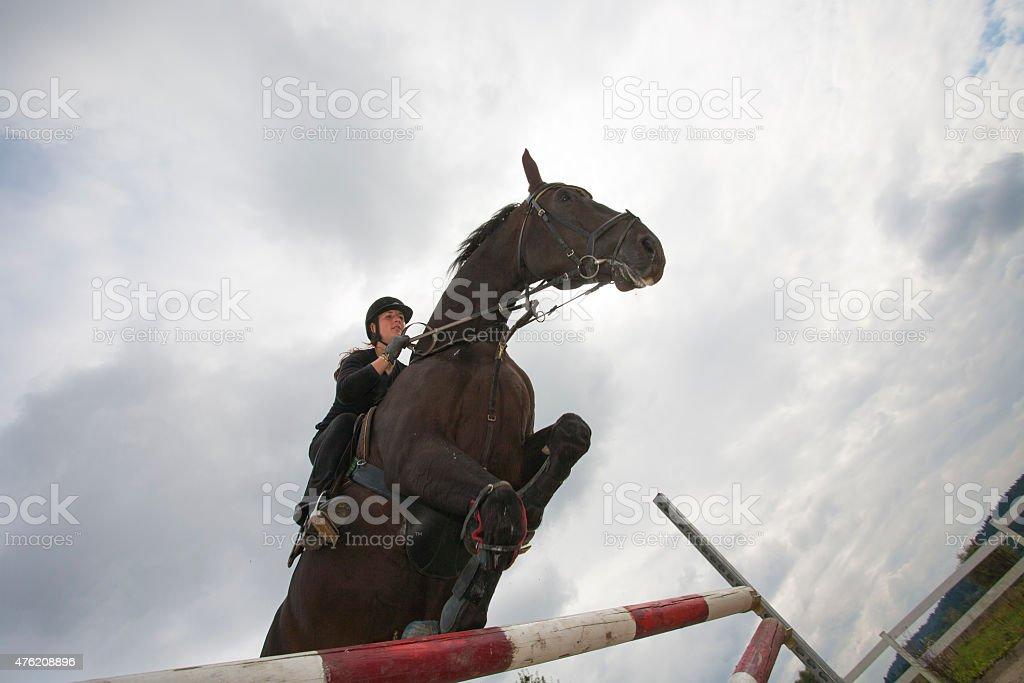 Horse jumping over hurdles stock photo