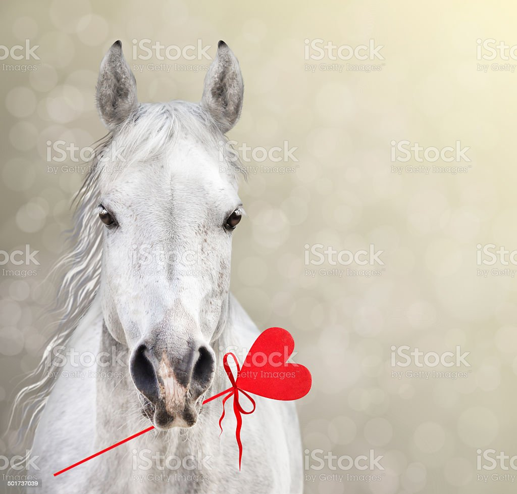 Horse Keep Heart Lollipop For Valentineu0027s Day On Bokeh Background Stock  Photo