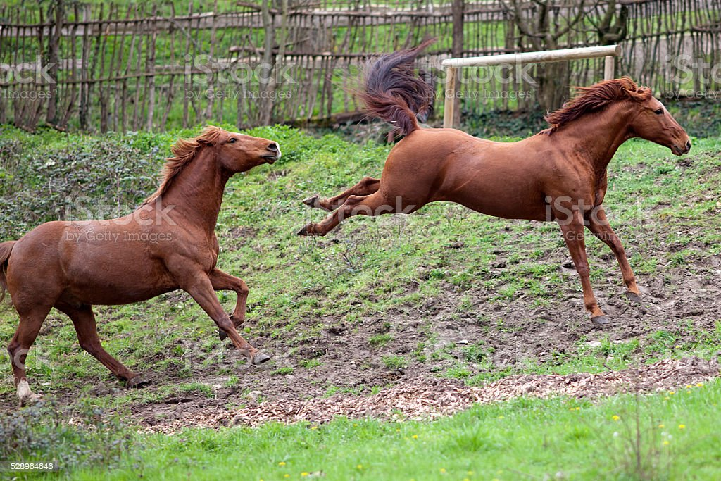 Horse kick out stock photo