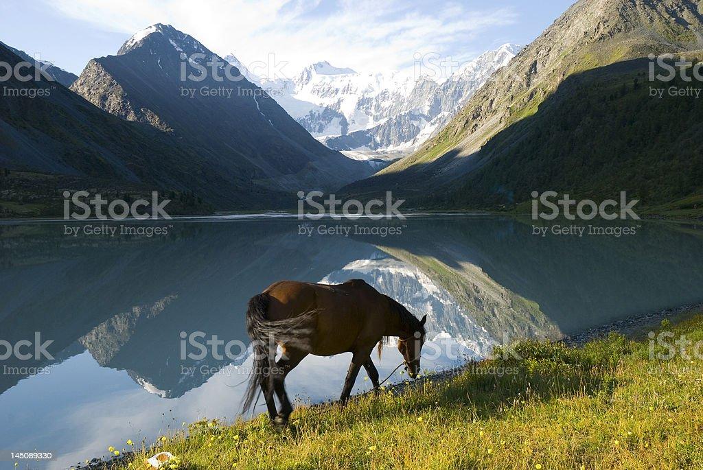 Horse, Lake Ak-kem royalty-free stock photo