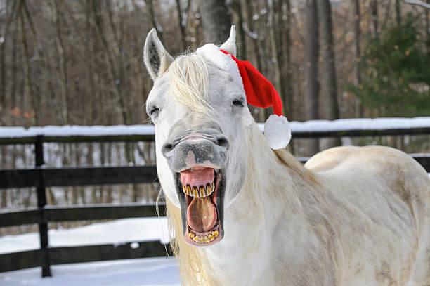 horse lachen tragen hut weihnachtsmann, weihnachten, vorderansicht - lustige pferde stock-fotos und bilder