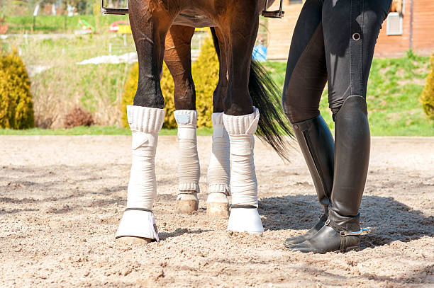 Horse legs in bandages with riding leather horsewoman boots outdoors picture id472492812?b=1&k=6&m=472492812&s=612x612&w=0&h=uqkyj5y8hnyjshzwjtxyndq9emakmplz0ufby5ekcyg=