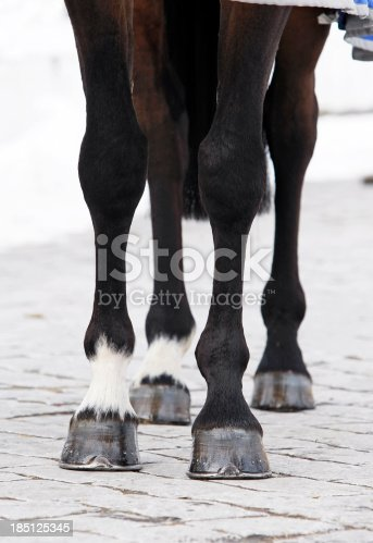 Close up shot of a bay horse's legs. Canon Eos 1D MarkIII.