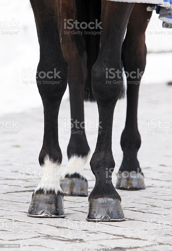 Horse Beinen – Foto