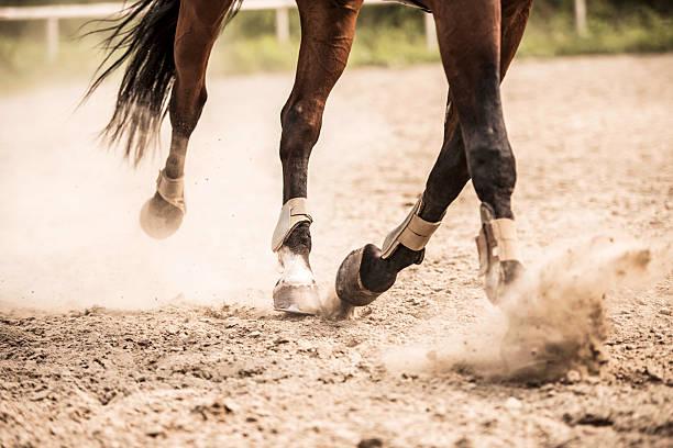 Horse legs picture id485111413?b=1&k=6&m=485111413&s=612x612&w=0&h=ufu54f7sqapjnuitgtfgekbpoajm7nkspn7 0shfkso=