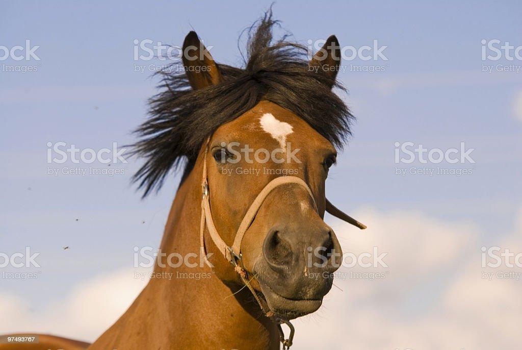 Horse listening royalty-free stock photo