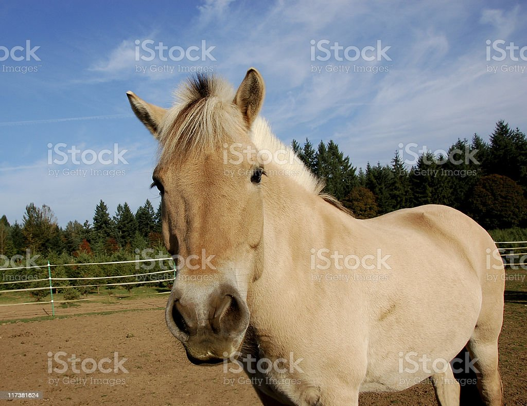 Horse Look stock photo